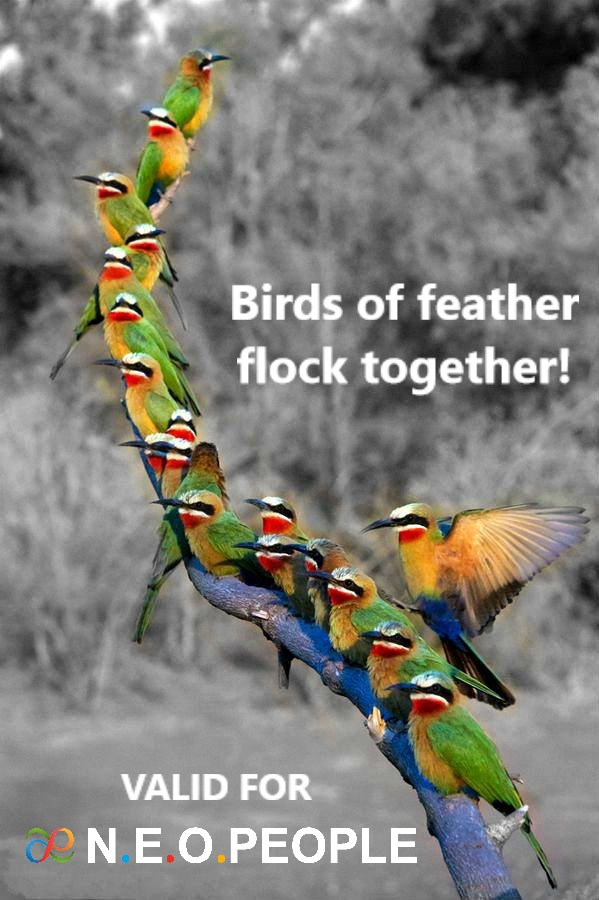 BIRDS OF FEATHER FLOCK TOGETHER! VALID FOR N.E.O.PEOPLE!
